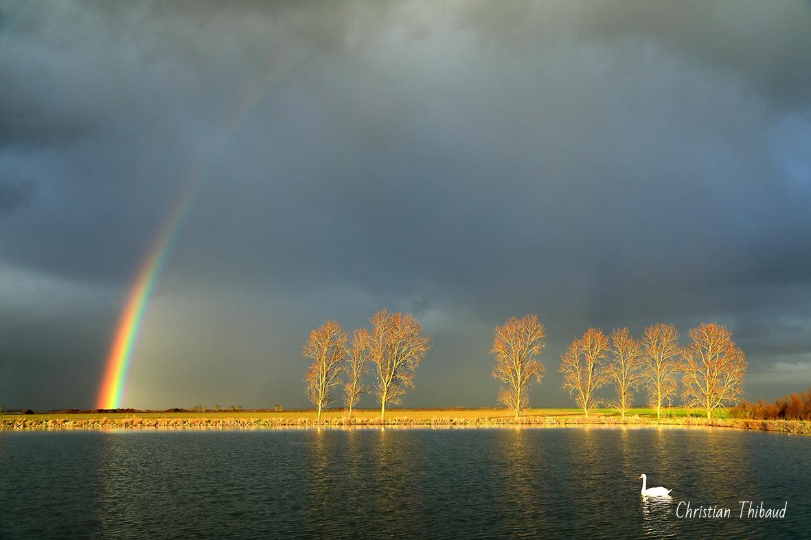 D'or et d'harmonie ...