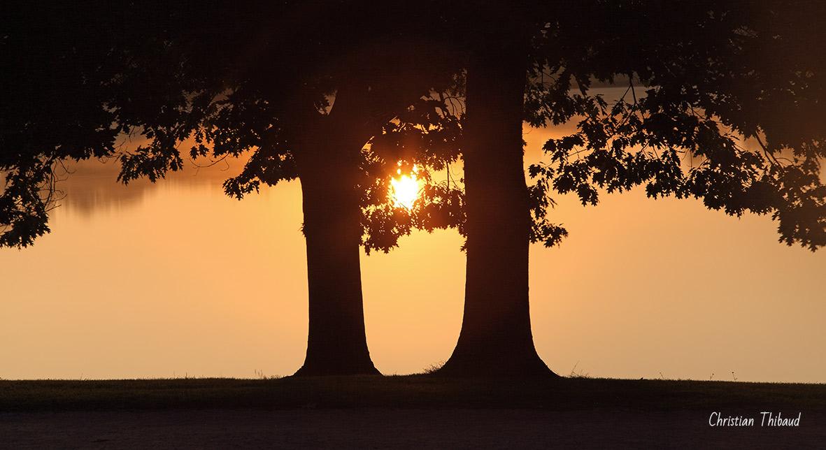Au coeur des arbres ...