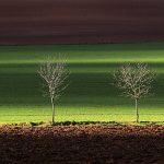 Caresser les arbres ...