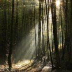 Cascade de lumière en sous-bois ...