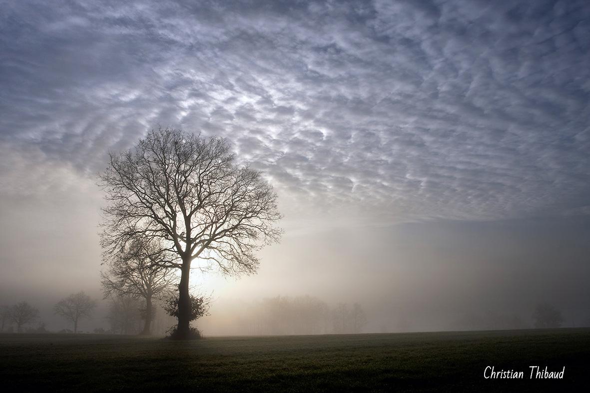 Coeur de brume ...