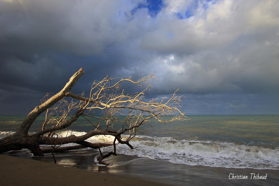 Désir de mer … (Nouvelle-Calédonie)