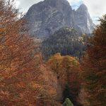 De l'arbre à la montagne  (Pyrénées)