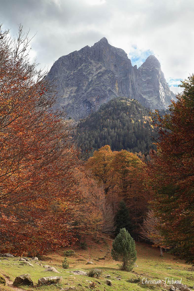 De l'arbre à la montagne ...  (Pyrénées)