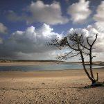L'arbre qui rêvait d'océans ... (Le Veillon-Les Sables d'Olonne)
