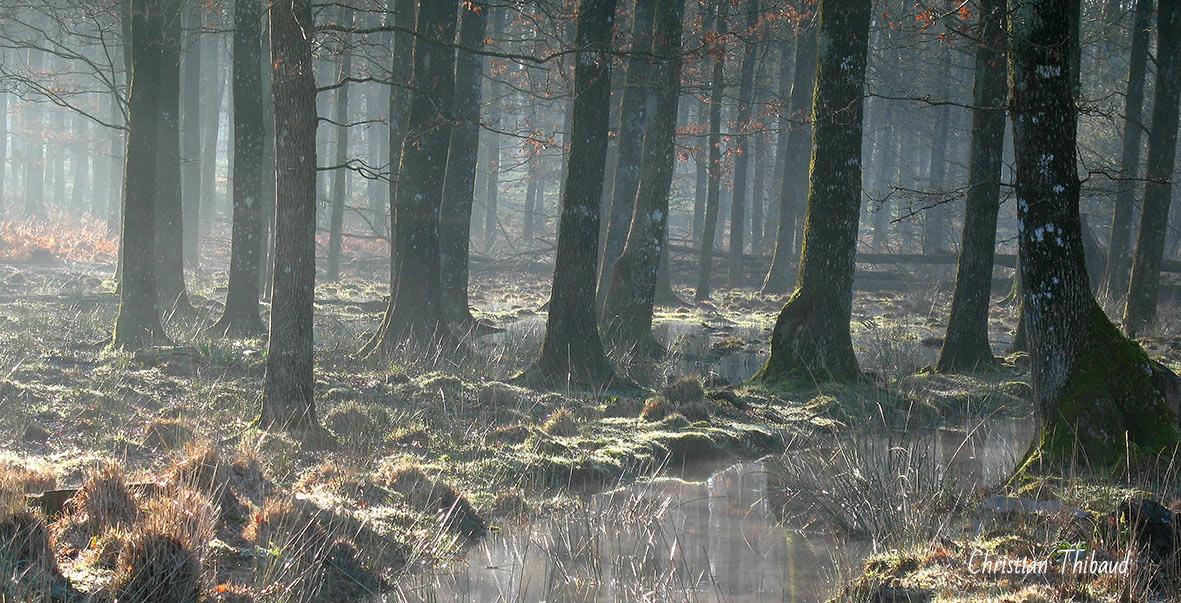 Secrets d'arbres ...