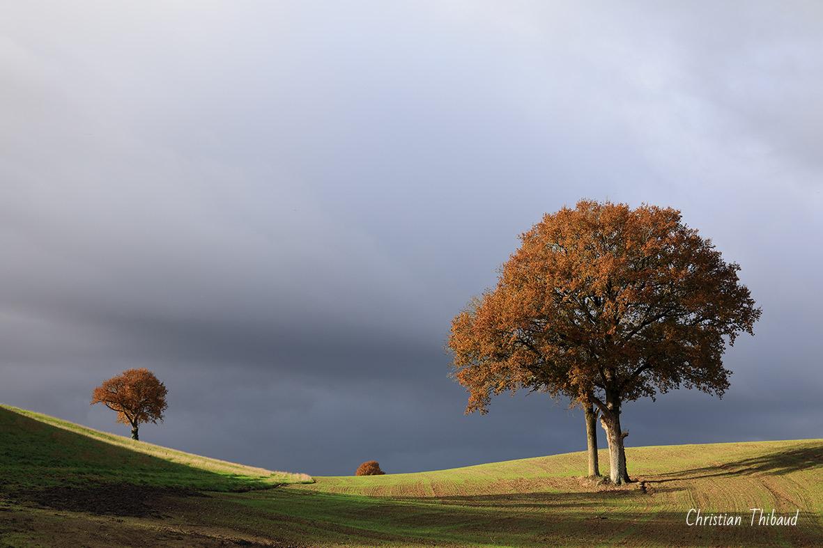 Sentinelles d'horizon ... (Bournezeau)