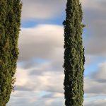 Si près et si loin ...(Villebois-Lavalette)-(Charente)
