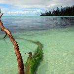 Tout près du paradis … (L'île aux pins – Nouvelle-Calédonie)